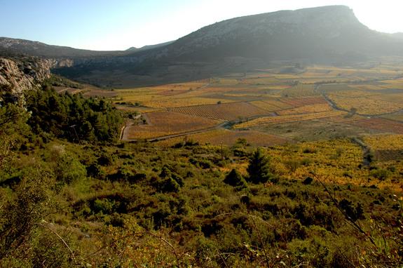 Côtes du Roussillon - Vallée de l'Agly