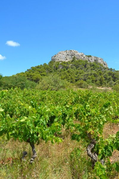 Chateau Pech Redon dans le massif de la Clape