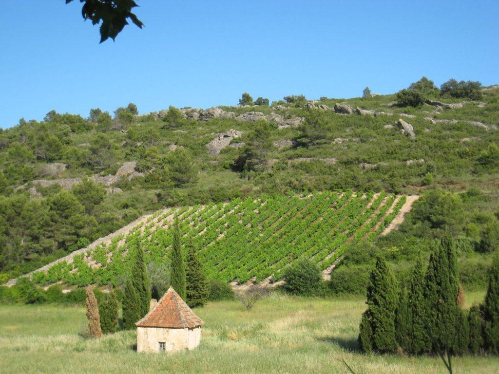Vignobles de Saint Chinian